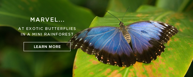 Marvel... At exotic butterflies in a mini rainforest - Learn More!